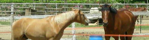 Horse riding is on the increase at Lake Garda