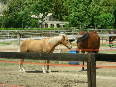 Some lovely horses!